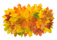 Maple leaves isolated on white background. Autumn red yellow. Arrangement Royalty Free Stock Photography