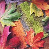 Maple leaves with knitting Stock Photo
