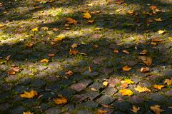 Maple leaves in the light of sunlight fell on the stone blocks with moss. stock images