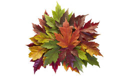 Maple Leaves Mixed Fall Colors Autumn Wreath. On White Background royalty free stock photography