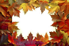 Maple Leaves Mixed Fall Colors Border Royalty Free Stock Images