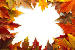 Maple Leaves Mixed Fall Colors Border 2 Royalty Free Stock Photo