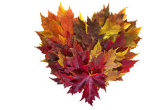 Maple Leaves Mixed Fall Colors Heart Wreath Stock Image