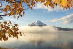 Maple leaves  and Mt.Fuji  at Lake Kawakuchi. Maple leaves ,color of Autumn  and Mt.Fuji with misty in the morning at Lake Kawakuchi Stock Photography
