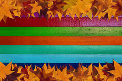 Maple leaves and multicolored background Royalty Free Stock Photo