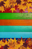 Maple leaves and multicolored background Royalty Free Stock Images