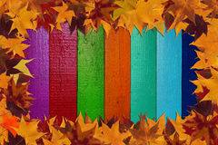 Maple leaves and multicolored background Royalty Free Stock Photography