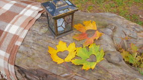 Maple Leaves Near The Lamp on a Fallen Tree stock video footage