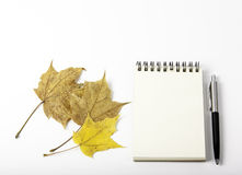 Maple leaves and note pad Royalty Free Stock Images
