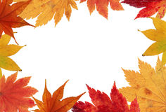 Maple leaves in orange stock photography