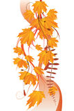 Maple leaves ornament Stock Photos