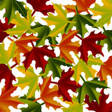 Maple leaves over white Stock Images