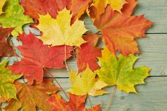 Maple leaves over the wooden boards Stock Photo