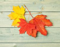 Maple leaves over the wooden boards Stock Photos