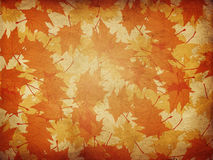 Maple leaves on paper background Stock Images