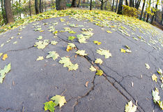 Maple leaves on the pavement. Maple leaves lying on the pavement in the form of the globe Royalty Free Stock Photos