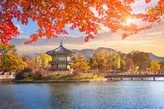 Maple leaves with pavilion old traditional at Gyeongbokgung pala Stock Photos