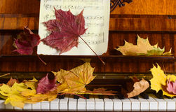 Maple leaves on a piano Stock Images