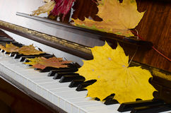 Maple leaves on a piano Royalty Free Stock Photography