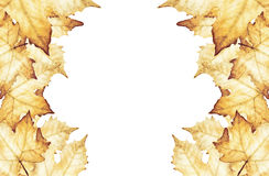 Maple leaves with place for text. Hand painted watercolor Royalty Free Stock Images