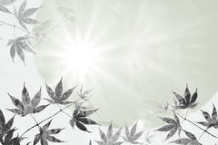 Maple leaves and rays of hope, sympathy background design stock image
