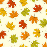 Maple Leaves Seamless Royalty Free Stock Photos
