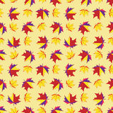 Maple leaves seamless background Royalty Free Stock Photos
