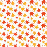 Maple leaves seamless pattern. Japanese maple pattern isolated on white. Falling leaves Stock Images