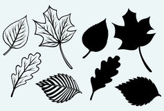 Maple leaves set Stock Images