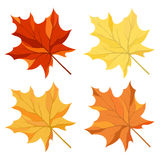 Maple leaves set Royalty Free Stock Photos