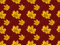 Maple leaves. Set of maple leaves isolated on brown royalty free stock image