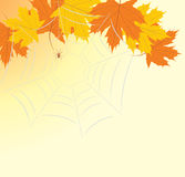 Maple leaves with spiderweb Royalty Free Stock Photography