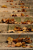 Maple leaves on a stair. Autumn Stock Photography