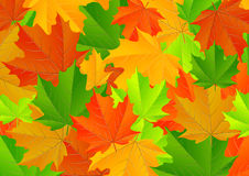 Maple leaves texture Royalty Free Stock Image