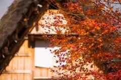 Maple leaves on Traditional gassho-zukuri house background. In Shirakawa-go,Japan royalty free stock photo