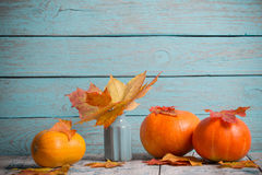Maple leaves  in vase and pumpkin Stock Image