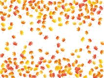 Maple leaves vector background, autumn foliage on white graphic design. Stock Images