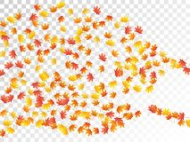 Maple leaves vector illustration, autumn foliage on transparent background. Stock Images