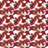 Maple leaves watercolor seamless pattern Royalty Free Stock Image