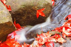 Maple leaves at waterfall Stock Photo