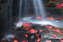 Maple leaves at waterfall Royalty Free Stock Photos