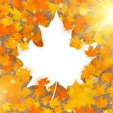 Maple leaves white frame with copy space. EPS 10 vector illustration