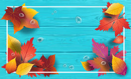 Maple leaves Wood blue background Stock Photography