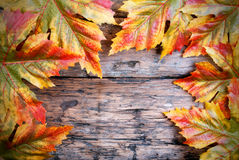 Maple Leaves on Wood Royalty Free Stock Images