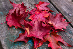 Maple Leaves on Wood. Maple leaves on old wooden surface Royalty Free Stock Photography
