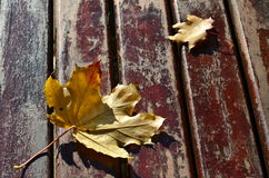 Maple leaves on wood Royalty Free Stock Image