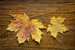 Maple leaves on the wooden background. Autumn maple leaves on the textured wooden background Royalty Free Stock Photography