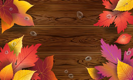 Maple leaves on wooden background Stock Images