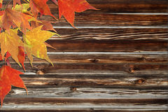 Maple leaves and wooden background Royalty Free Stock Photography