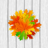 Maple leaves on a wooden white background Stock Photo